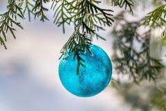 在一个积雪的树枝的蓝色圣诞节球 库存照片