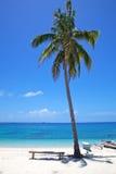 在一个空白沙子热带海滩的棕榈树在Malapascua海岛,菲律宾 免版税库存照片