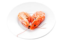在一个空白牌照的虾 免版税库存照片