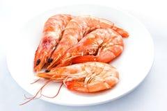 在一个空白牌照的虾 免版税图库摄影