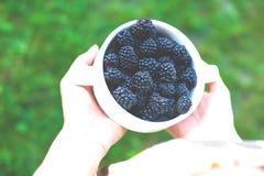 在一个空白碗的黑莓 库存照片