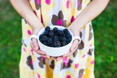 在一个空白碗的黑莓 库存图片