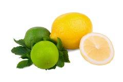在一个空白背景查出的柑橘水果 水多,成熟和黄色柠檬和两鲜绿色的石灰和薄菏新鲜的叶子  图库摄影