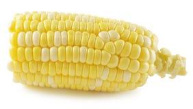 在一个空白背景查出的玉米 免版税库存照片