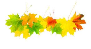 在一个空白背景查出的秋叶 免版税图库摄影