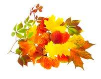 在一个空白背景查出的秋叶 免版税库存照片