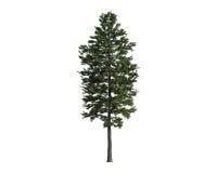 在一个空白背景查出的结构树 库存图片