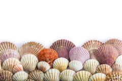 在一个空白背景查出的贝壳 免版税库存图片