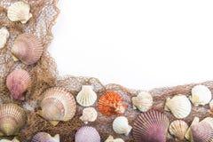 在一个空白背景查出的贝壳 图库摄影