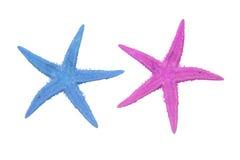 在一个空白背景的二个五颜六色的海星 图库摄影
