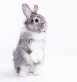 在一个空白背景的兔子。 免版税库存图片