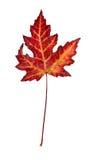 在一个空白背景的叶子 免版税图库摄影