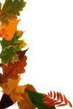 在一个空白背景的叶子 免版税库存照片