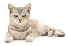 在一个空白背景的小猫 免版税库存照片