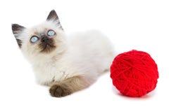 在一个空白背景的小猫 免版税库存图片