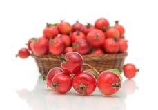 在一个空白背景的成熟红色苹果 免版税库存照片
