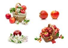在一个空白背景的成熟红色苹果 免版税库存图片