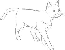 在一个空白背景的猫 免版税库存图片