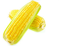 在一个空白背景的玉米 免版税库存图片