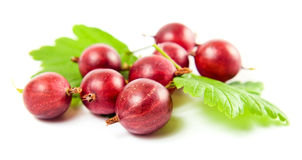 在一个空白背景的红色鹅莓 免版税库存照片