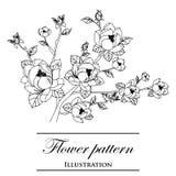 在一个空白背景的花卉模式 免版税库存照片