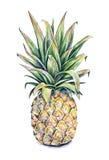 在一个空白背景的菠萝 水彩五颜六色的例证 热带的果子 手工 库存照片