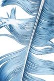 在一个空白背景的蓝色羽毛 库存图片