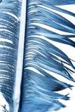 在一个空白背景的蓝色羽毛 库存照片