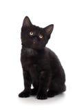 在一个空白背景的逗人喜爱的黑色小猫 库存照片