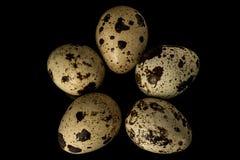 在一个空白背景的鹌鹑egg.isolated 免版税库存图片