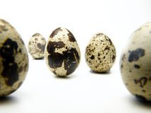 在一个空白背景的鹌鹑egg.isolated 库存照片