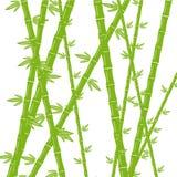 在一个空白背景的绿色竹子 库存例证