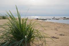 在一个空的海滩的海芦苇 免版税库存照片