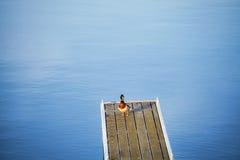 在一个空的码头的孤独的鸭子 图库摄影