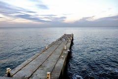 在一个空的码头的海鸥 免版税库存图片