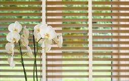在一个窗口前面的白色兰花花与木马眼罩 免版税库存照片