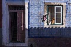 在一个窗口的两只猫在一个老大厦在传统Bica邻里在里斯本 免版税库存图片