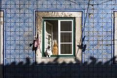 在一个窗口的两只猫在一个老大厦在传统Bica邻里在里斯本 免版税图库摄影