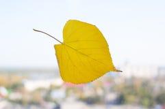 在一个窗口的黄色叶子在被弄脏的城市背景 秋天的概念 免版税库存照片