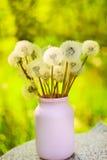 在一个简单的花瓶的白色蓬松蒲公英 库存图片