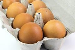 在一个箱子的鸡蛋在白色背景 免版税图库摄影