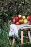 在一个篮子的一揽子和有机秋天苹果在一张木桌上在果树园 库存照片