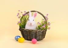 在一个篮子的复活节兔子与花 免版税库存照片