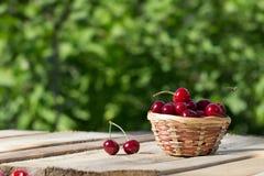 在一个篮子的大和水多的成熟樱桃在叶子背景的木板晴天 免版税图库摄影