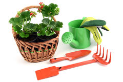 在一个篮子的大竺葵花盆与园艺工具 库存照片