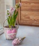 在一个篮子的桃红色风信花在窗口和心脏 免版税库存照片