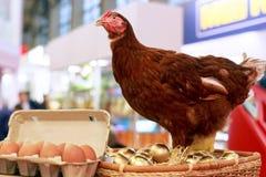 在一个篮子的母鸡用金黄鸡蛋 免版税图库摄影