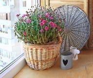 在一个篮子的淡紫色菊花在阳台 免版税库存图片