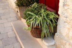 在一个篮子的紫鸭跖草的绿色灌木在对房子的门前面 免版税库存图片
