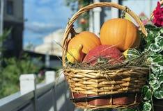 在一个篮子的红色和橙色南瓜从藤条 免版税库存图片